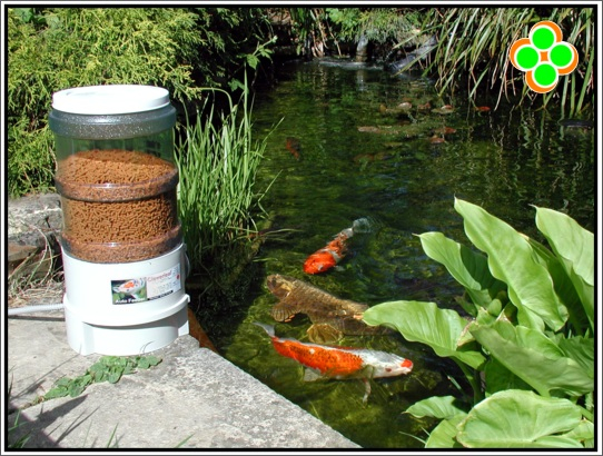 Alimentador autom tico para peces for Como abonar un estanque para peces